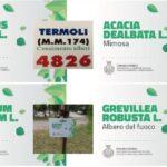 042 Termoli (Cb)